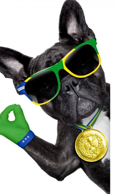 480x800 Wallpaper brasil, fifa, world cup, 2014, dog, bulldog