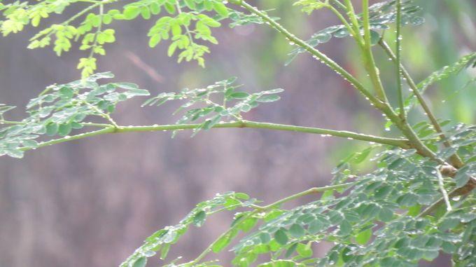 "Photo ""RainGlory"" by Scorpio-Mystique"