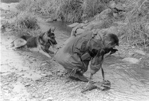 War Dogs German Stream