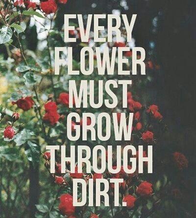 From Havilah Cunnington bible study - Grow