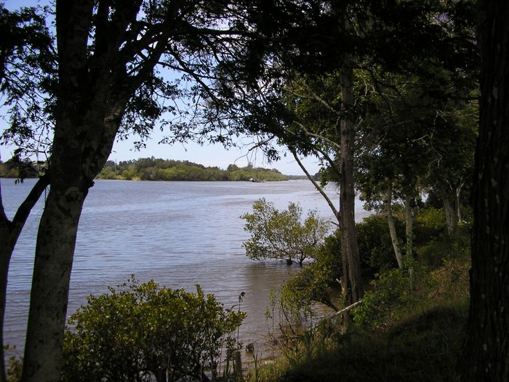 Nambucca River near Nambucca Heads, Northern NSW, Aust. #Nambuccaheads #whitealbatross