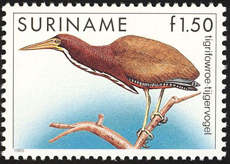 Rufescent Tiger Heron stamps - mainly images - gallery format