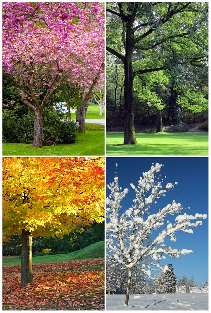 photos tree four seasons ..