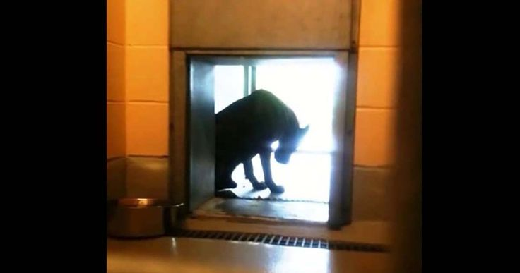 A Blind Dog Was Found Alone At A Car Wash – Watch How He Responds To This Stranger -Pass it on.