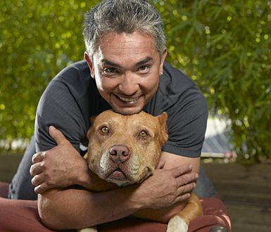 What Caesar Millan has done for dogs and his approach to human behaviour and its impact on animals, is incredible.