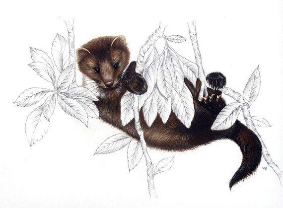 Faina.Stampa artistica naturalistica in edizione di ArteinShop