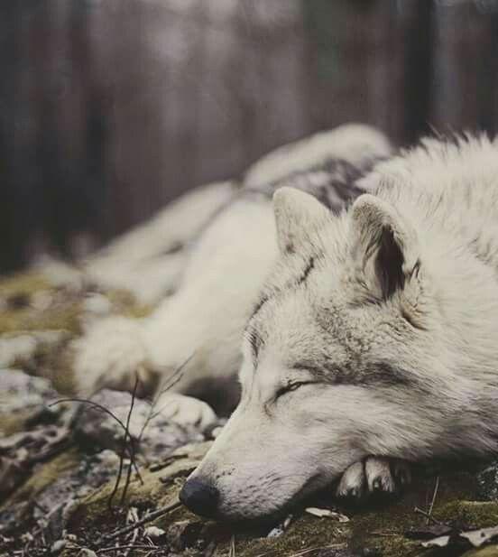 dors bien mon <3 de loup <3 ****