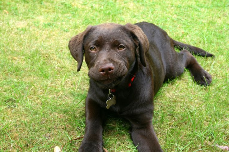 Natural Constipation Cures For Dogs