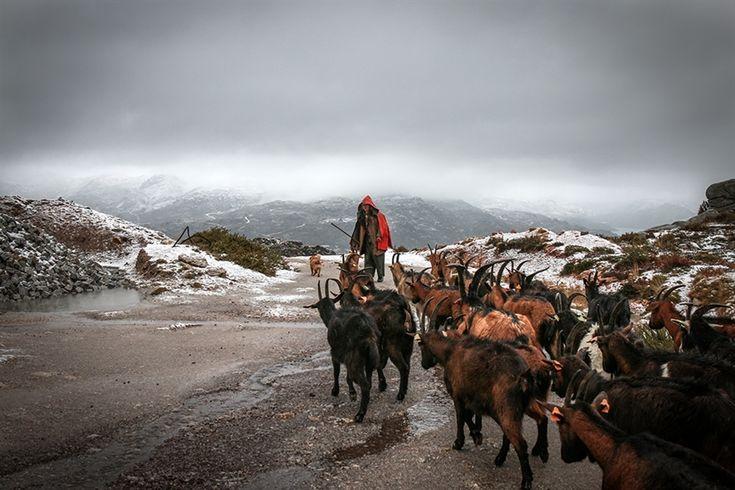 'Portugal Rural', de Armando Jorge