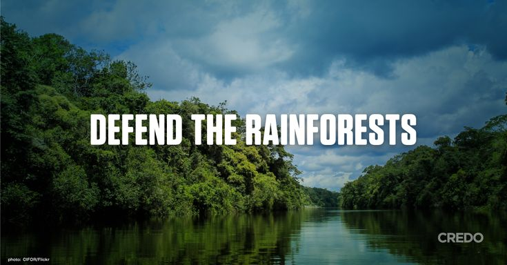 """Tokyo Olympic authorities recently admitted that they are using irreplaceable rainforest wood in the construction of Olympic venues. At least 87% of the plywood panels used f/Tokyo's New Natl Stadium came from the rainforests of Malaysia & Indonesia."" Click f/details & please SIGN & share petition to tell the Internatl Olympic Committee: No more rainforest destruction f/the Tokyo 2020 Olympics."