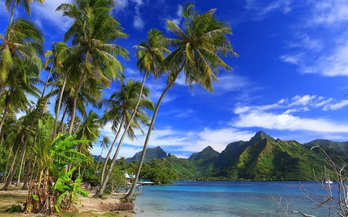 Download wallpapers Moorea Island, Ocean, beach, tropical islands, palm trees, French Polynesia, Taahiamanu Beach