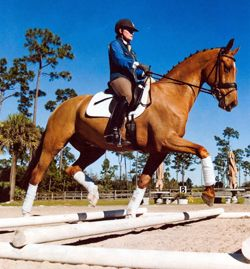 Part 2: Work Over Cavaletti To Create Impressive, Consistent Trot Lengthenings