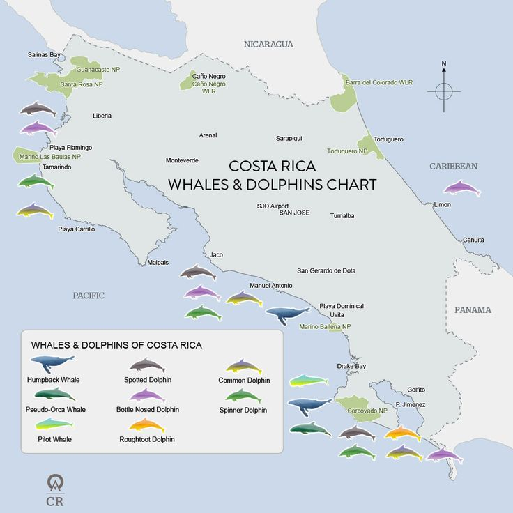 Costa Rica Whales and Dolphins Map – This map shows the species of whales and dolphins that inhabit or are known to pass through Costa Rican waters throughout the year. We cannot guarantee that you will see every species during the seasonal periods we have outlined on the map. This map reflects the historical migration trends and documented observations of marine mammals in Costa Rica.