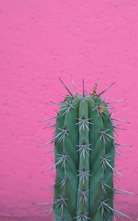 desixlb: hello august. at casa gilardi, tacubaya, ciudad de mexico, d.f. architect: luis barragan © desixlb 2014