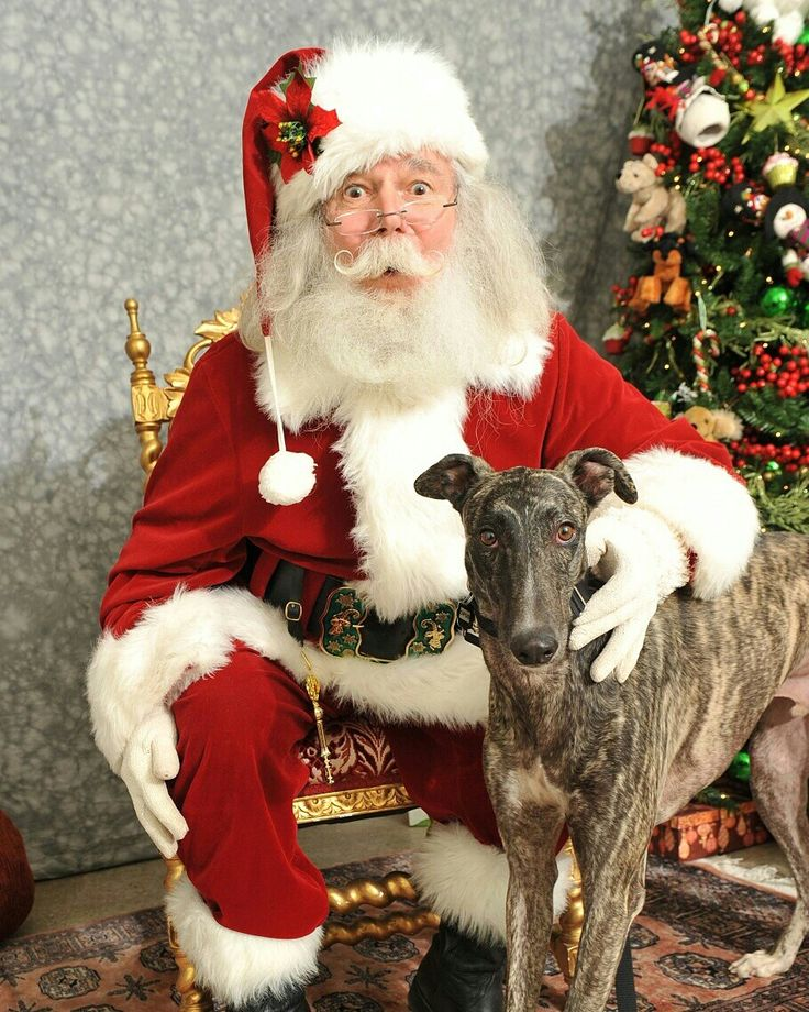 Opus got to meet Santa for the first time! Does your pup have a Santa appointment?  Visit our website!