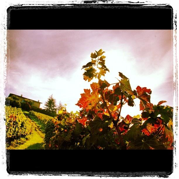 "Autumn in Franciacorta. #franciacorta #autunno #autumn #vigneti #vineyard #foglie #leaf #orange #yellow"""