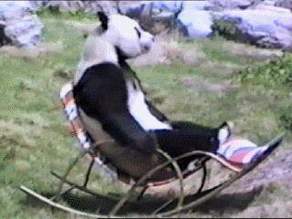 Giant Panda Extinction Funny Gif #351 - Funny Panda Gifs  Funny Gifs  Panda Gifs