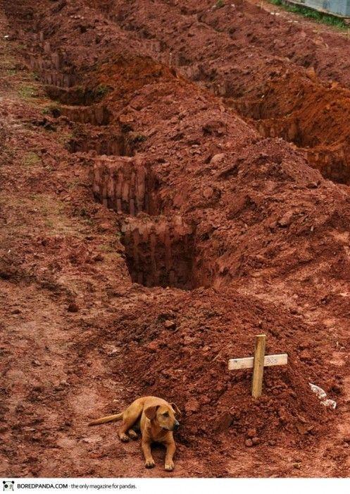 Rio de Janeiro 2011, un chien a coté de la tombe de son maitre