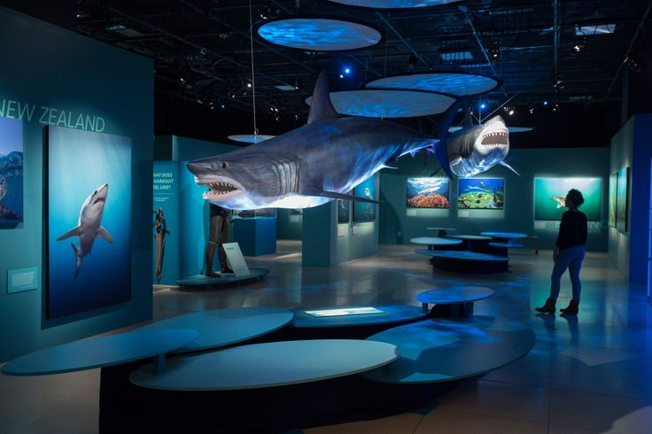 Picture of Sharks exhibition