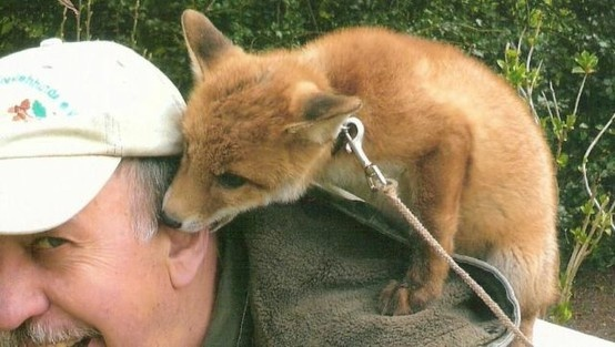 beautiful :): Animal Pics, Kiss, Pet Foxes, Cute Baby, Beautiful, Ears, Baby Foxes, Adorable Photo, Animal Pet Pictures