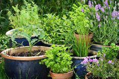 Gemüse im Topf pflanzen – 6 wichtige Anbautipps