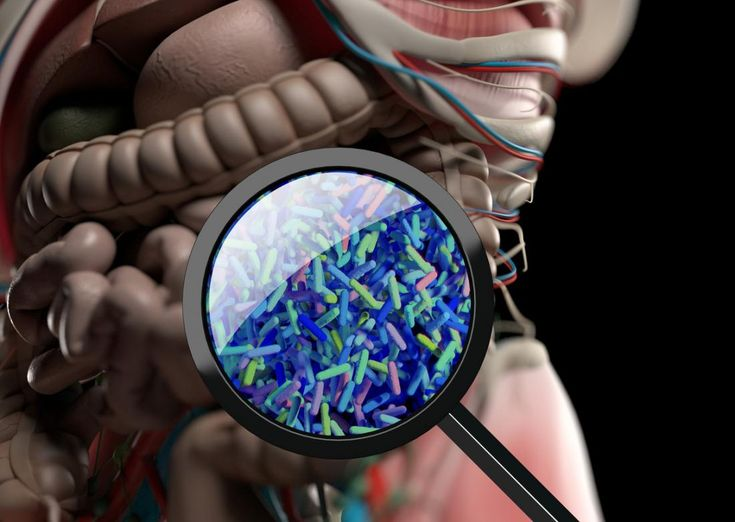 PTSD linked to changes in gut bacteria