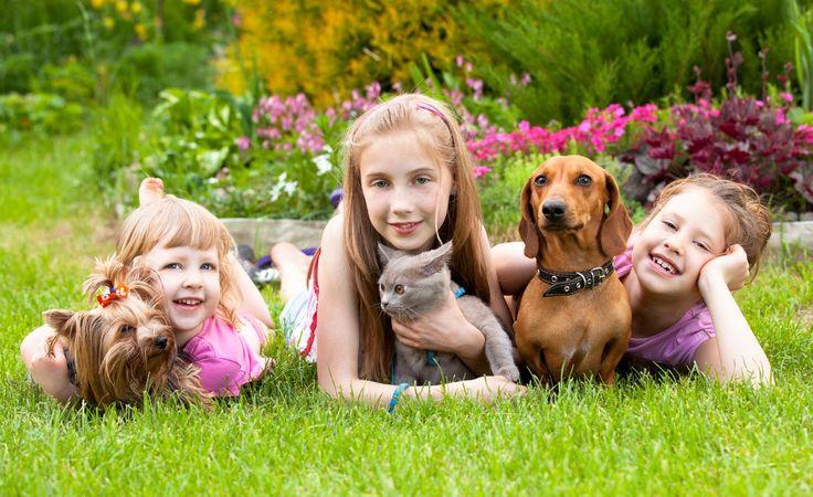 kicsiszív. A gyermekek állatbarátai