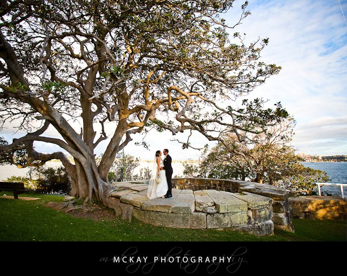 Bradley's Head wedding photo - big fig tree