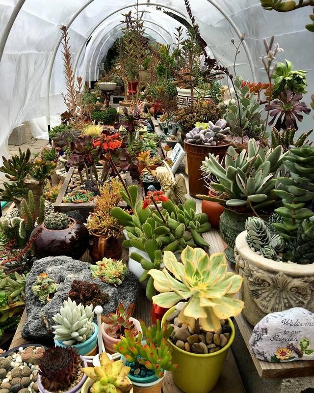 small succulent garden ideas on 79 Superb Organizing Gardens With Succulents Garden Ideas Succulent Garden Design Succulent Landscape Design Succulents