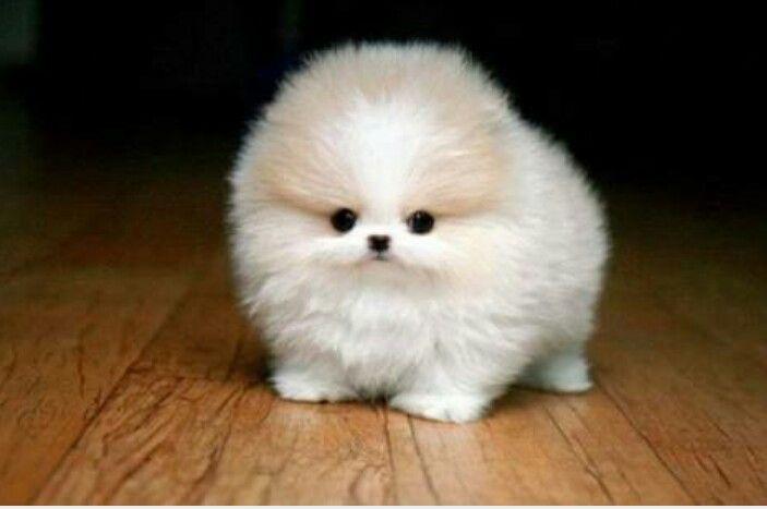 Such a cute little dog !!!!