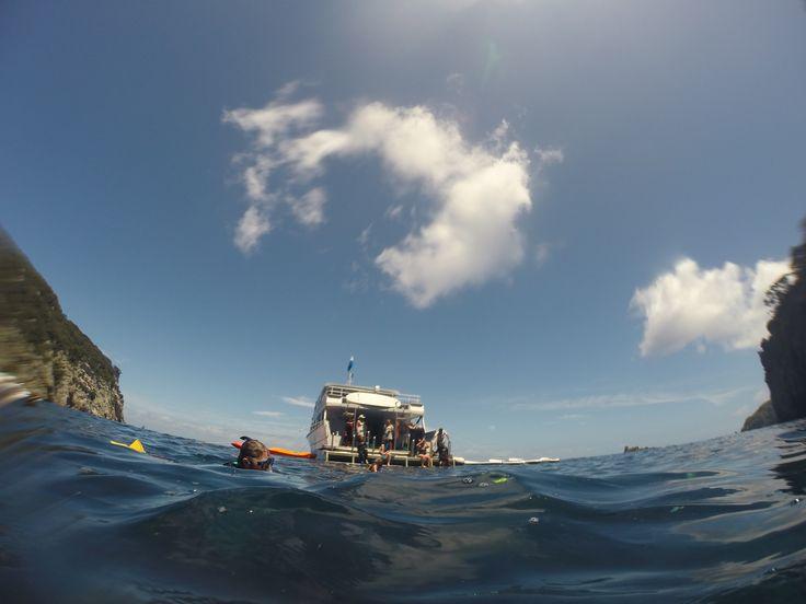 Snorkelling around Poor Knights Island.