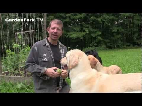 A simple how to for a garden trellis : GardenFork.TV