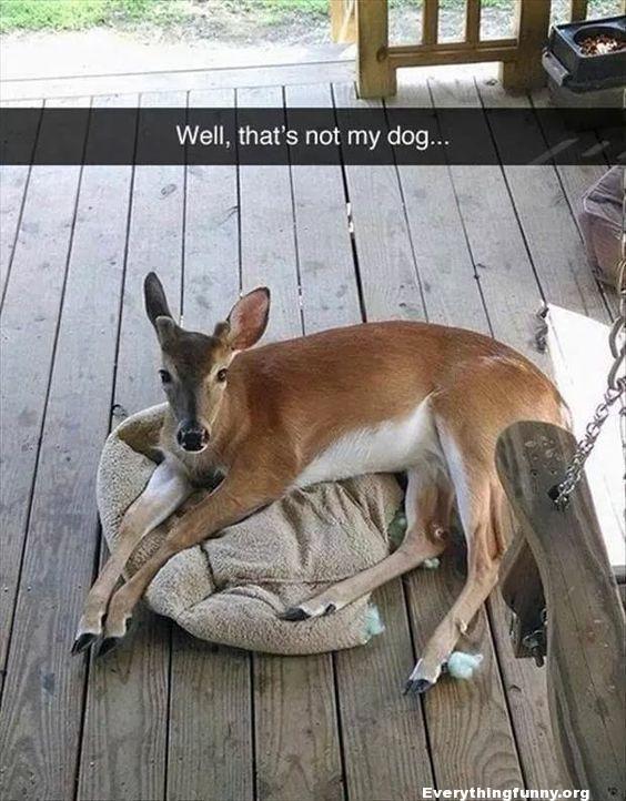 Top 28 Funny Animal Pet Memes