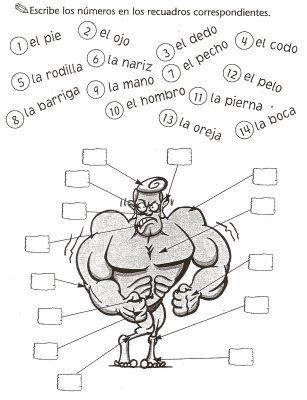 Español Lengua Extranjera: El cuerpo humano (1): Ejercicio