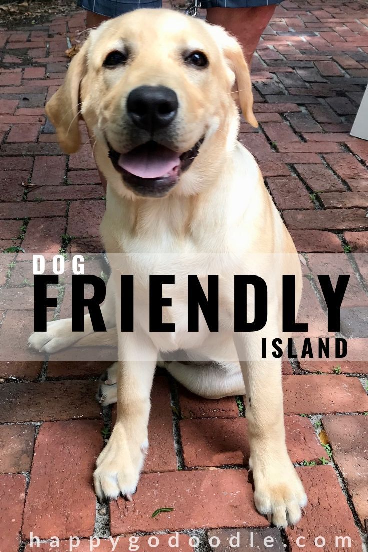 21 Things To Do In Amelia Island With Your Dog Dog Friends Dog
