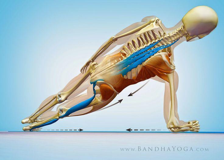 Mejores 70 imágenes de Yoga Anatomy en Pinterest   Anatomía de yoga ...