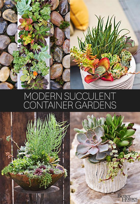 Succulents are one of the most versatile plants out there, and we love how they can completely transform an area of your home. See how to use succulents in containers for a fast, easy way to modernize your spaces. #succulents #containergardening #houseplants #homedecor
