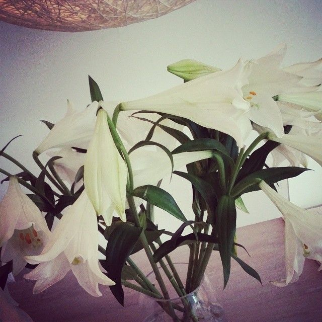 #lilys #instaflowers #instaweekend