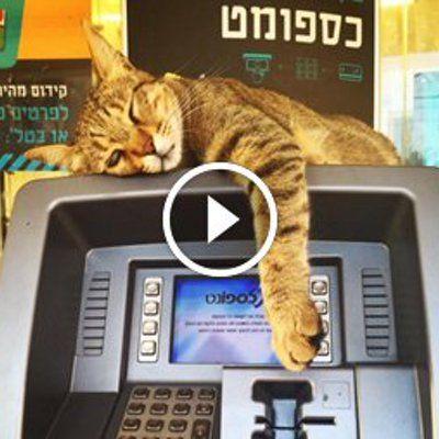 Vidéo : Ce chat fait économiser de l'argent aux passants