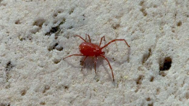 Come curare una pianta colpita dal ragno rosso