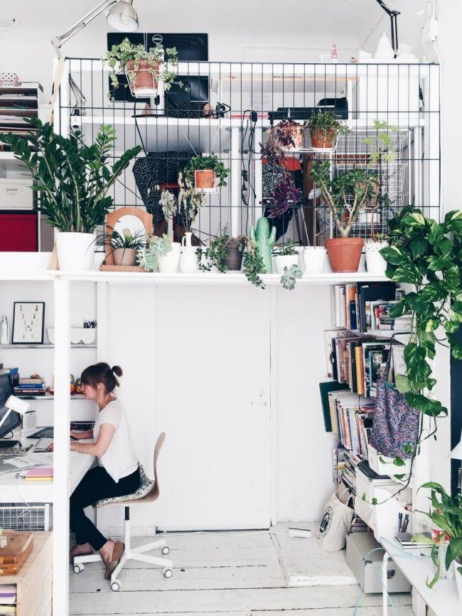 stylische zimmerpflanzen f rs b ro blink blink studio. Black Bedroom Furniture Sets. Home Design Ideas