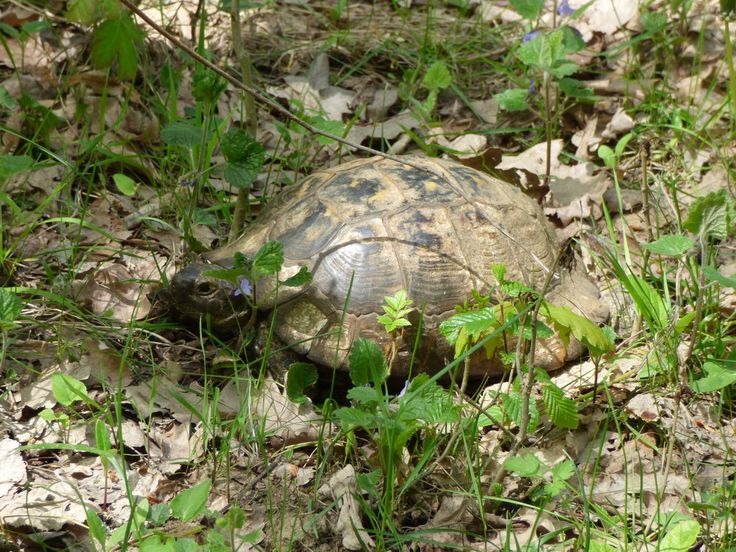 Turtle on Cozluk Valley trail in Macin Mountains, Romania. Read more about the trail on the blog.