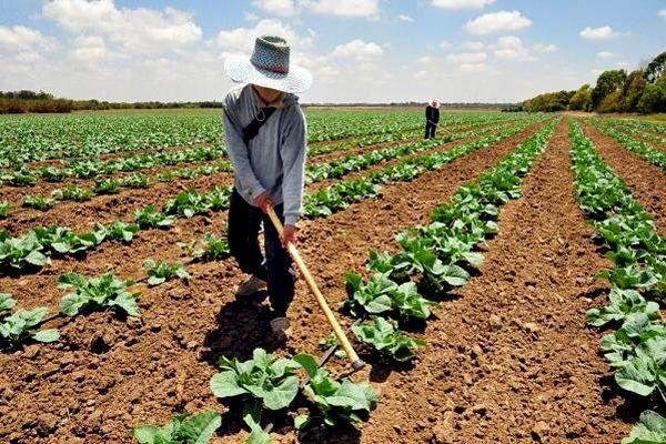 Destinarán recursos al impulso de actividades agrícolas ...