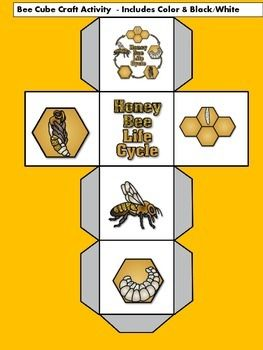 Bees: Bees Craft for hands on learning fun! Bees   Bee Life cycle  Honeybees   Bees Craft   Bees Activity   Kindergarten Science   First Grade Science    Insects**********************************************************************Thanks for following Green Apple Lessons!