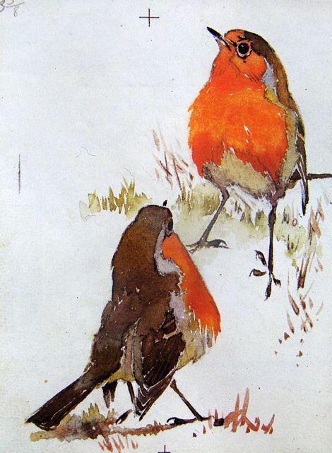 Robin Redbreast by Eric Ennion