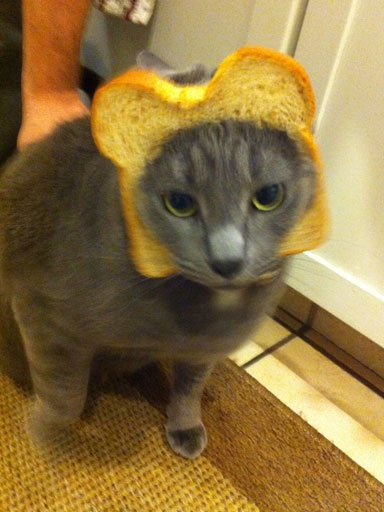 Cat In A Bread Box Endearing 12 Best Bread Cats Images On Pinterest  Bread Breads And Sandwich Loaf Decorating Inspiration