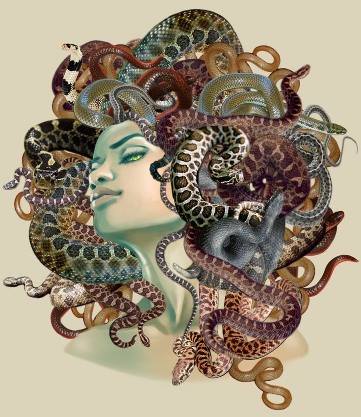 Medusa was a monster, a Gorgon, generally described as having the face of a hideous human female with living venomous snakes in place of hair. Gazing directly upon her would turn onlookers to stone. Most sources describe her as the daughter of Phorcys and Ceto,