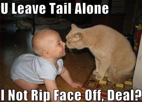 Cute Cats And Cat Gifts: Funny Cats With Captions #Funny #Cats Check more at http://hrenoten.com