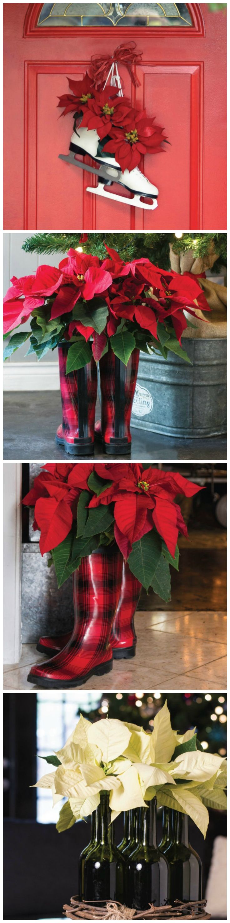 Decorate with Poinsettias In Surprising Spaces --> http://www.hgtvgardens.com/decorating/fun-poinsettia-holiday-arrangements?soc=pinterest