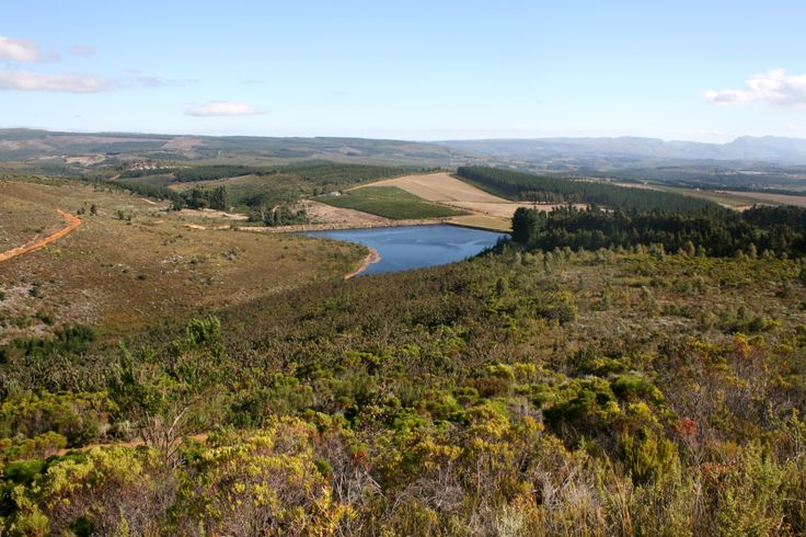 The most amazing view of the Elgin Valley from high up in the mountains on De Rust farm, home of Paul Cluver wines.